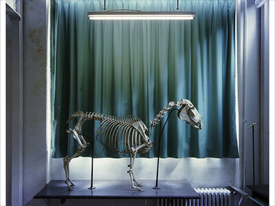 Richard Barnes, 'Left Panel, Horse, Musee Fragonard', 2005