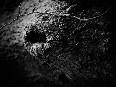 Jon Wyatt, 'Culbone Wood, North Somerset', 2011