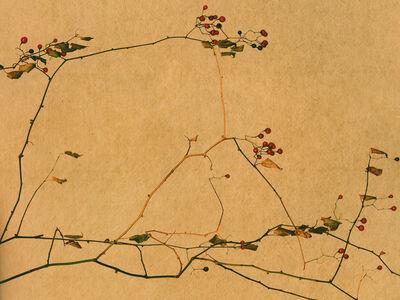 Albarrán Cabrera, 'Kyoto, #604', 2016