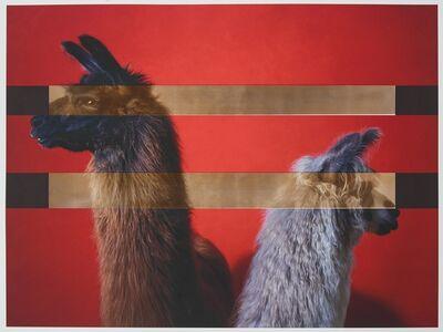 R. J. Kern, 'Supreme Champion Llama Male / Female Pair', 2019