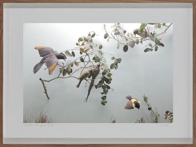 Lien Botha, 'Parrot Jungle, South African Museum, Cape Town', 2009