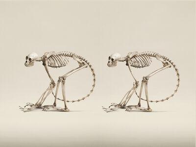 Jim Naughten, 'Red-Faced Spider Monkey', 2014