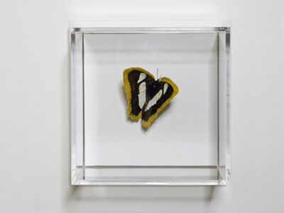 Esther Traugot, 'Black and Pale Green butterfly', 2020