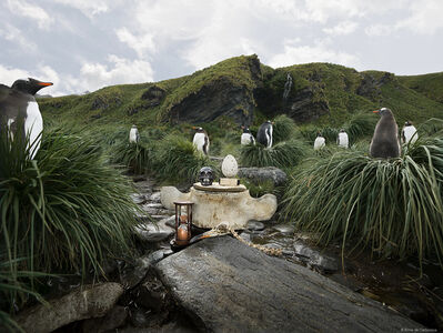 Anne De Carbuccia, 'Guardian Penguins', 2014