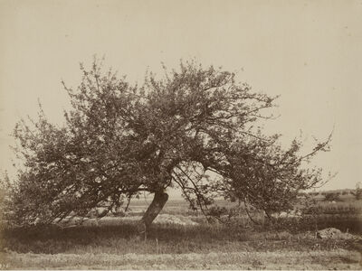 Eugène Cuvelier, 'Fruit Tree', 1860c/1860c