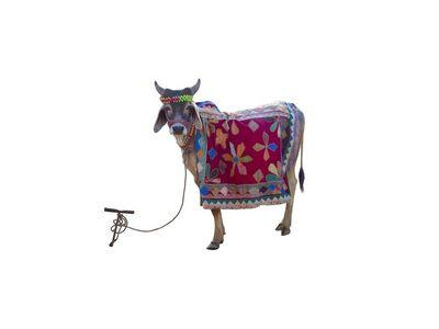 Toni Meneguzzo, 'Divine bovine', 2007 -2013