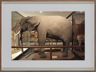 Lien Botha, 'Loxodanta Africana, South African Museum, Cape Town', 2009