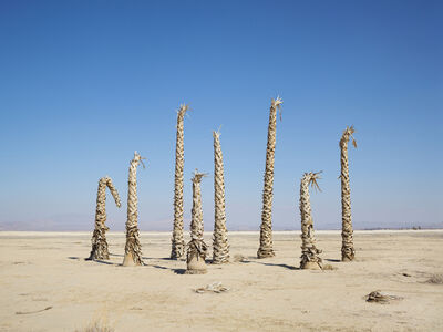 Lucas Foglia, 'Palm Trees without Water, California', 2014