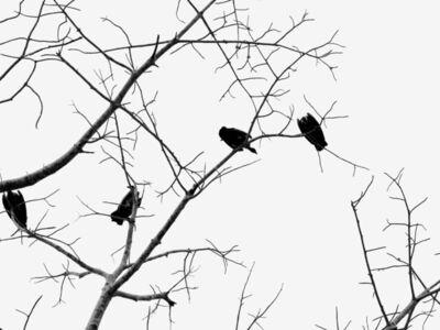 Alina de Oliveira, 'Vultures', 2017