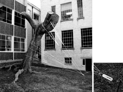 Felippe Moraes, '16 kg para entortar uma árvore', 2012