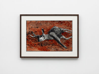 Ed Templeton, '(dead Deer) Caucos, CA 2017', 2019
