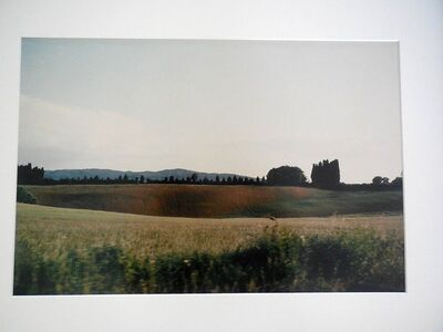 Joel Meyerowitz, 'Tuscany, Hillside, 1996', 1996