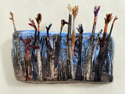 Jo-Ann Brody, 'Forest for the Trees', 2021