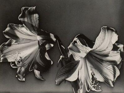 Carlotta Corpron, 'Solarized Flowers', 1940