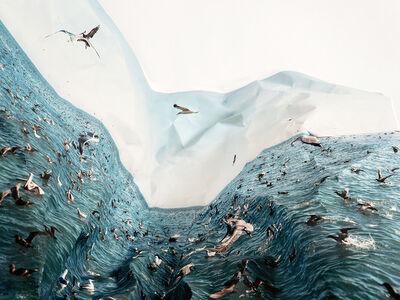 Laura Plageman, 'Feeding Frezy', 2012