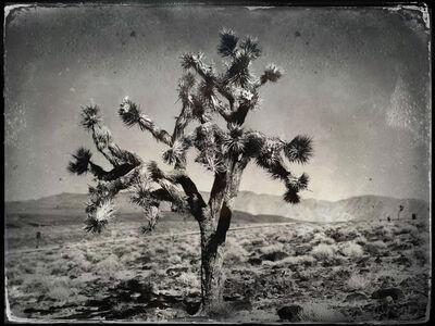 Michael Rosenthal, 'Joshua Tree', 2019