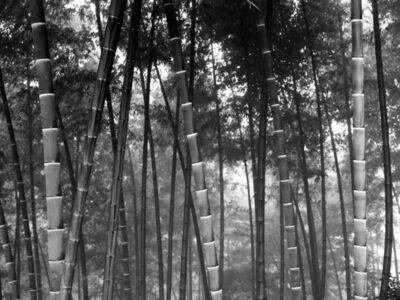 DaeSoo Kim, 'bmb2010194', 2010