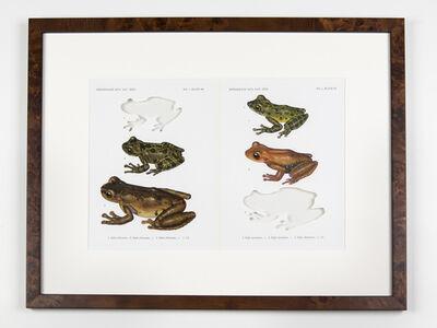 Brandon Ballengée, 'RIP Yellowbelly Voiceless Treefrog: After David M. Dennis, 1970', 2014