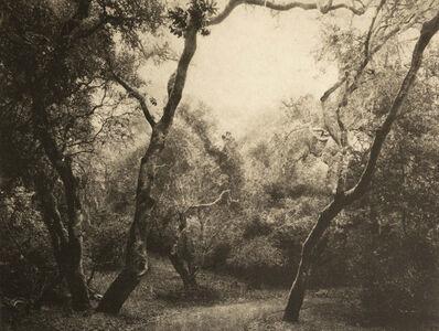 Michael O'Shea, 'Old Lyons Road', 2020