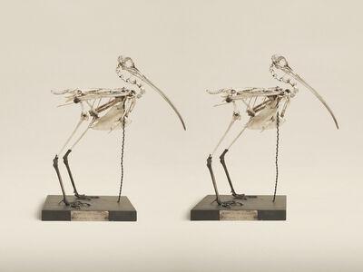 Jim Naughten, 'Eurasian Curlew', 2014