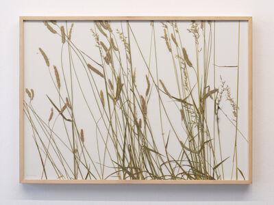 herman de vries, 'rasenschnitt, collected geissleite 01 06 ´09', 2009