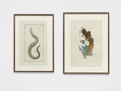 Anri Sala, 'Untitled (Muraena Ophis/England)', 2018