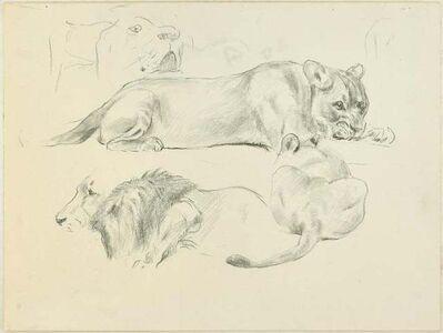 Wilhelm Lorenz, ' Lions', Mid 20th Century
