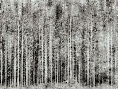 Nadia Attura, 'Into the Woods', 2015