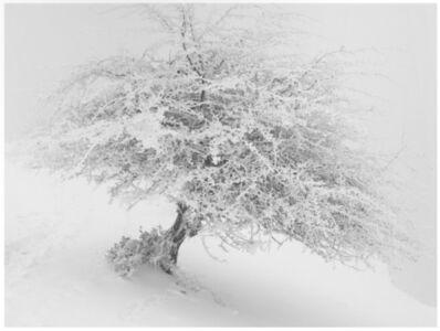 Imanol Marrodán, 'Frozen trees 1 ', 2010