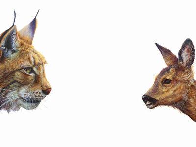 Hazel Mountford, 'Top Predator - Lynx and Deer', 2020