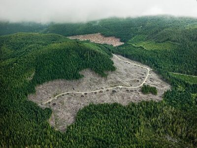 Edward Burtynsky, 'Clearcut #4, Vancouver Island, British Columbia, Canada', 2016