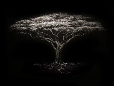 Mitchell Lonas, 'Acacia Tree', 2014