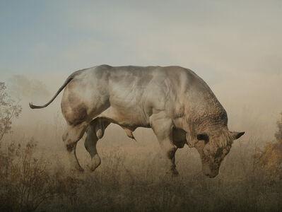 Rory Carnegie, 'Bull', 2016
