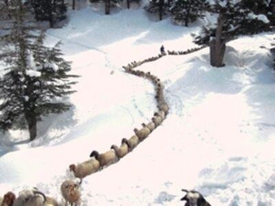Muzaffer Ketmen, 'Hungry animals in winter'