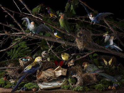 Paulette Tavormina, 'Concert of Birds', 2018
