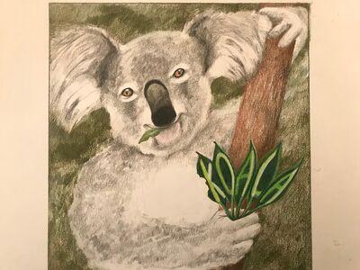Laura Broaddus Hexner, 'Koala', 2019