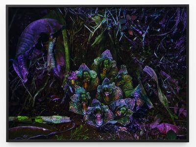 Richard Mosse, 'Acineta superba II', 2019