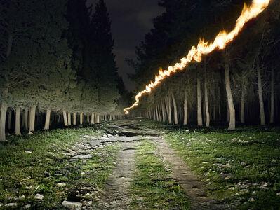Shai Kremer, 'KKL Forest'