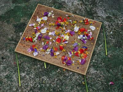 Abelardo Morell, 'Flowers for Lisa #18, in Monet's Gardens, Giverny, France', 2016