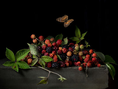 Paulette Tavormina, 'Blackberries and Butterfly, After AC', 2015