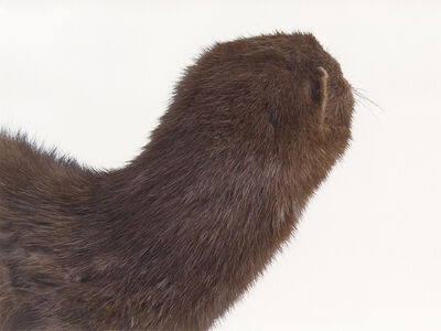 Roni Horn, 'A Mink Look', 1998