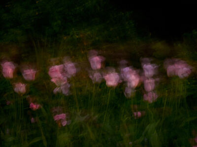 Anna Beeke, 'Midnight in the Garden #77', 2018