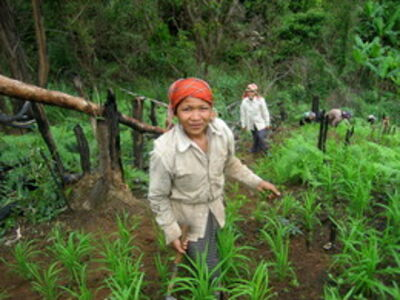 Lamphay Inthakoun, 'Farming the forest'