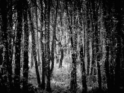 Jon Wyatt, 'Fonceverane Forest, Reserve Naturelle del'Astrobleme de Rochechouart-Chassenon, France (From the series The Sixth Extinction)', 2013