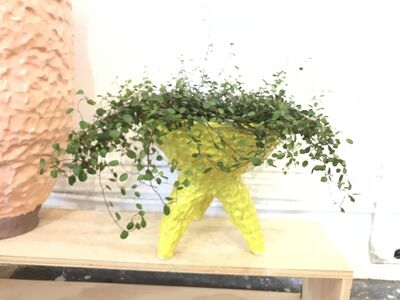 Sean Gerstley, 'Speckled Yellow Tripod Planter', 2018