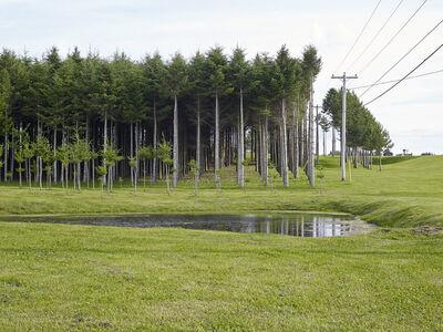 Susana Reisman, 'Managed Forest', 2014