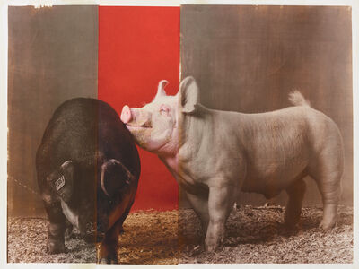 R. J. Kern, 'Supreme Champion Swine Male / Female Pair, 2018 Minnesota State Fair', 2019