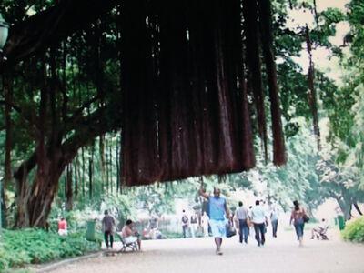 Marcos Chaves, 'A árvore que caminha', 2008