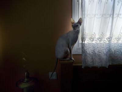 Angelika Sher, 'Untitled #7, ', 2009