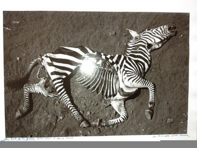 Peter Beard, 'Zebra (The End of the Game, 1960)', 1989